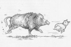 Boar biff