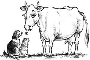 Ch10cow