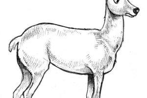 Ch15 deer