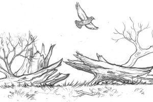 Ch7 bird log
