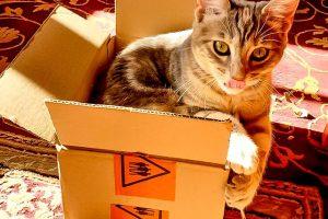 Claus box1