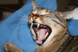 IMG_5757 (2brutus nov yawn)