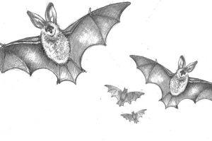 ch25 more bats