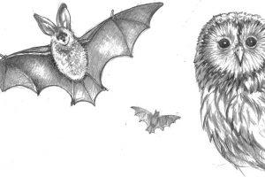 haslam2 bats