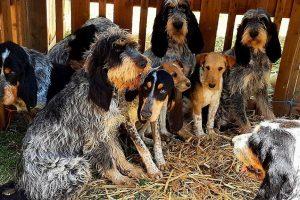 hounds.jpg